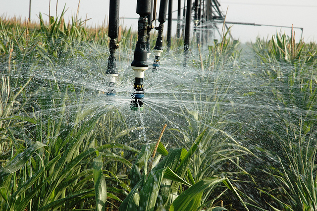 Irrigating with wastewater